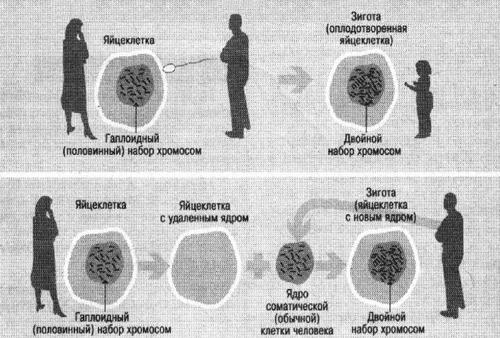 Схема рождения человека
