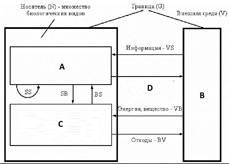 Схема внешних отношений биогеоценоза